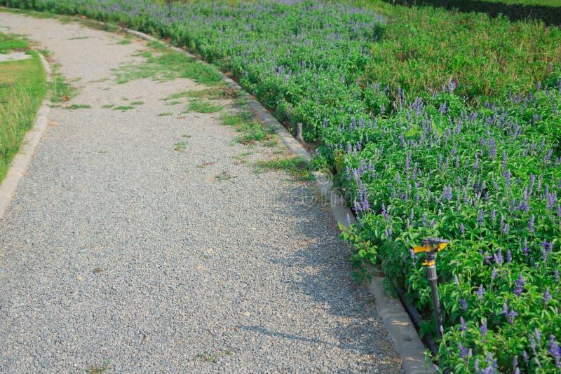 Gå vägen med den härliga och färgrika trädgården fotografering för bildbyråer