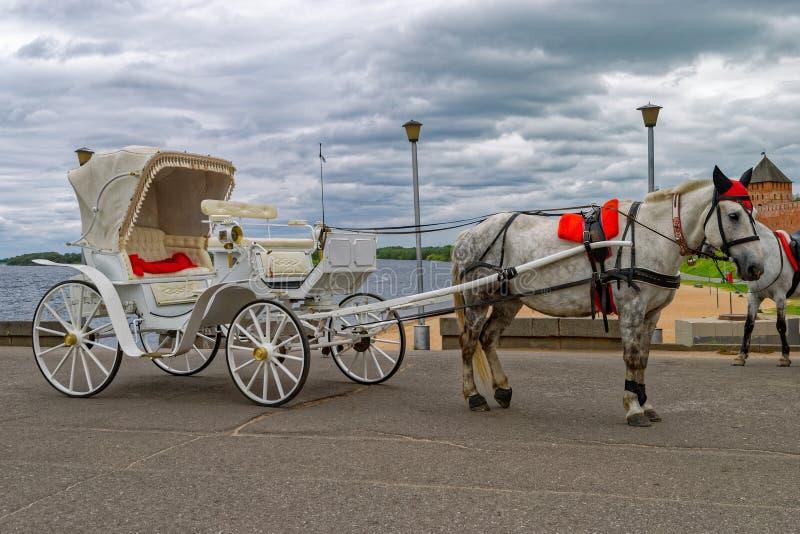 Gå vagnen med den gråa hästen som ska ridas av turister royaltyfria foton