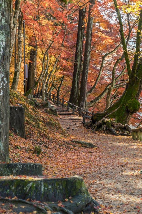 Gångbana med färgrika Autumn Leaf arkivfoton