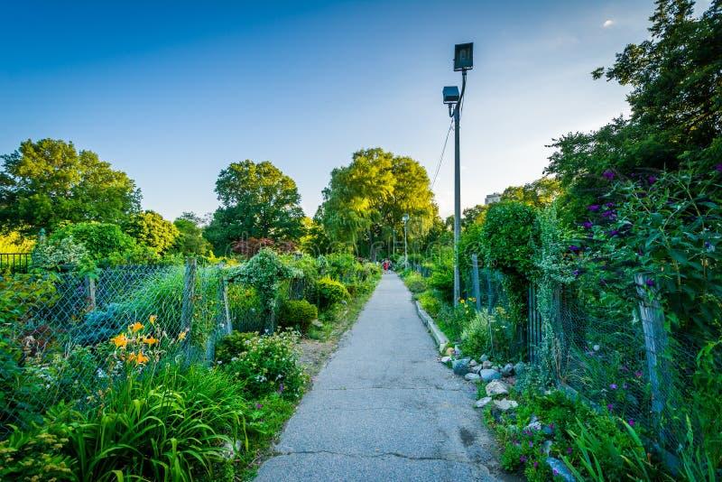 Gångbana och trädgårdar på tillbaka fjärdkärr, i Boston, Massachusetts arkivbilder