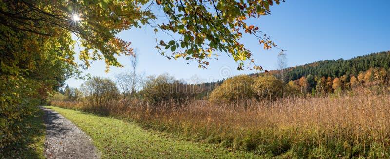 Gångbana på kanten av bokträdskogen royaltyfri foto