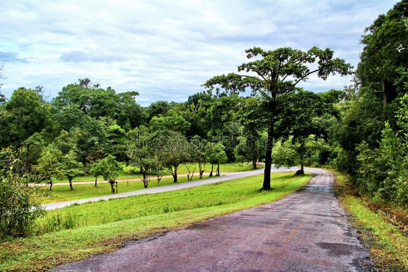 Gångbana på Kao Yai National Park, Thailand royaltyfri foto