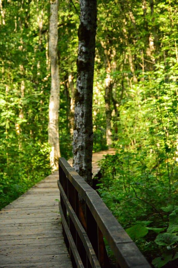 Gångbana som göras av trä royaltyfria foton