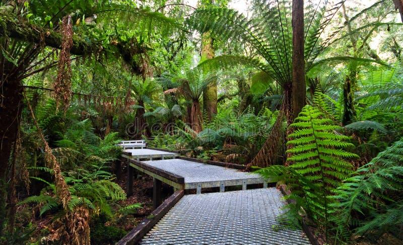 Gångbana till och med regnskogen arkivfoto