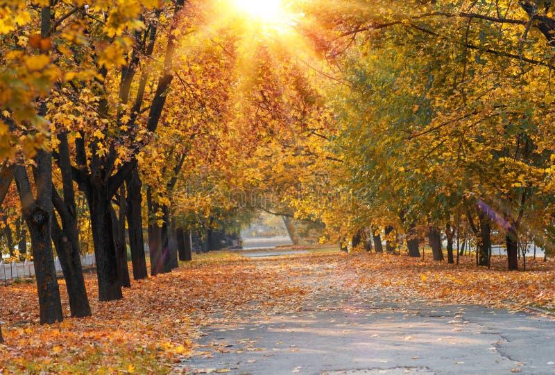 Gångbanan i mitt av träd med gula sidor i en stad parkerar på en hösteftermiddag, Ukraina royaltyfri bild