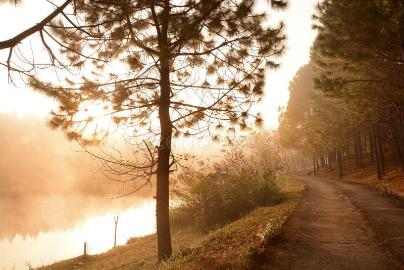 Gångbanan längs det dimmiga dammet och pinjeskog arkivfoton