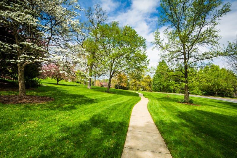 Gångbanan och våren färgar på Johns Hopkins på monteringen Washington, I royaltyfria bilder