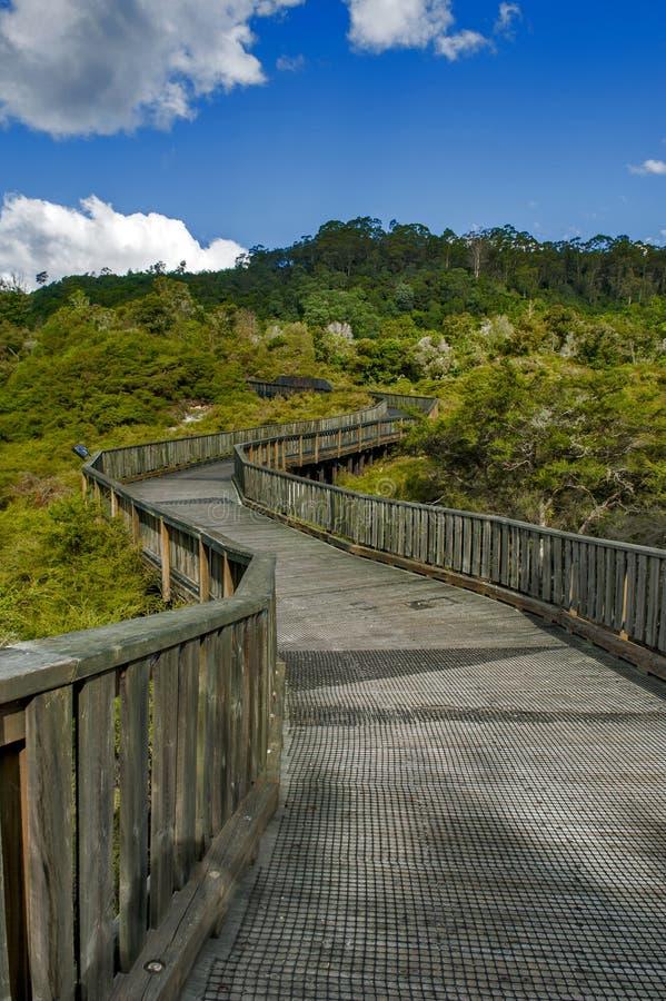 Gångbanan till den Whakarewarewa geyseren på den Te Puia thermalen parkerar i geoth royaltyfri foto