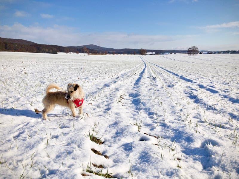 Går walkies ner en snöig vinterbana royaltyfri foto