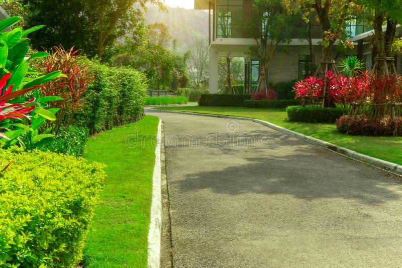 Gården för främre gräsmatta i en härlig trädgård och en grå väg med grön och röd sidashurb av landskap för hus royaltyfri foto