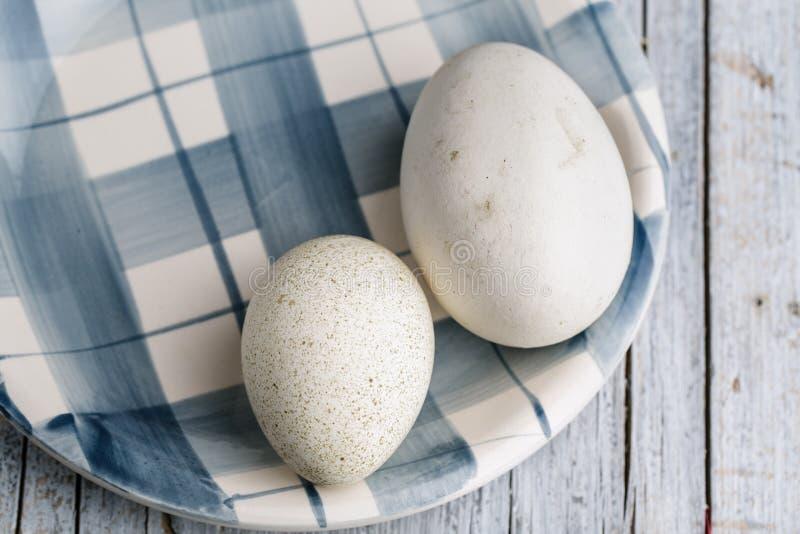 Gås och Duck Egg royaltyfria foton