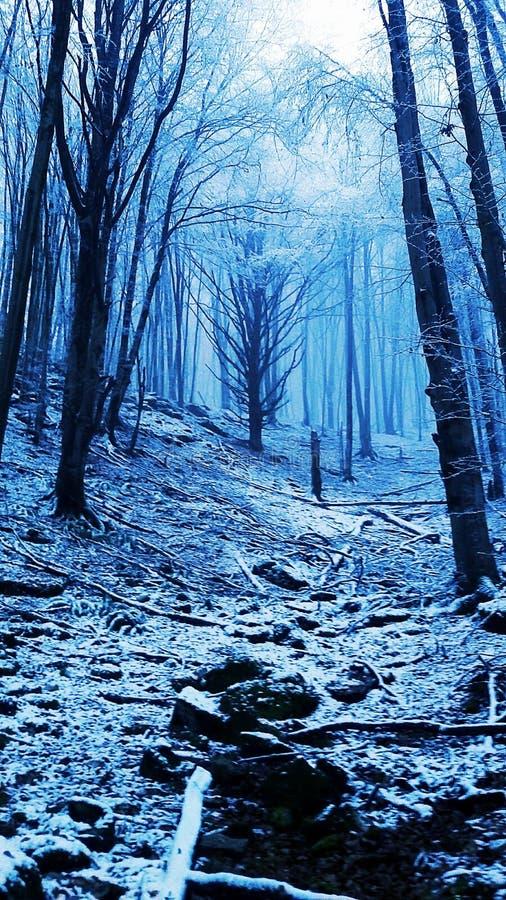 Gåtan av en skog royaltyfria foton