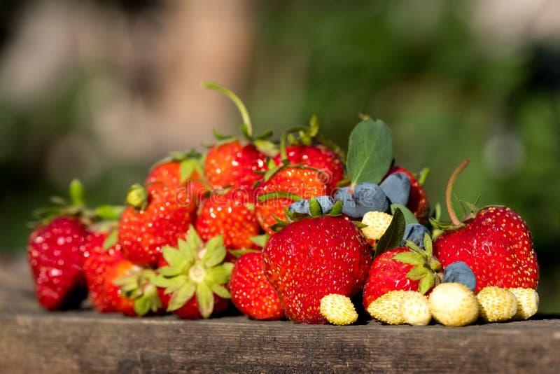 Gåvorna av sommaren av vitaminerna mycket olika bär kaprifol och vita bär för röda jordgubbar och royaltyfria foton