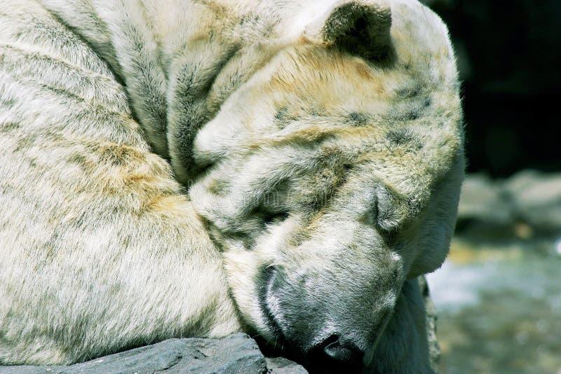 Géant de sommeil photo libre de droits
