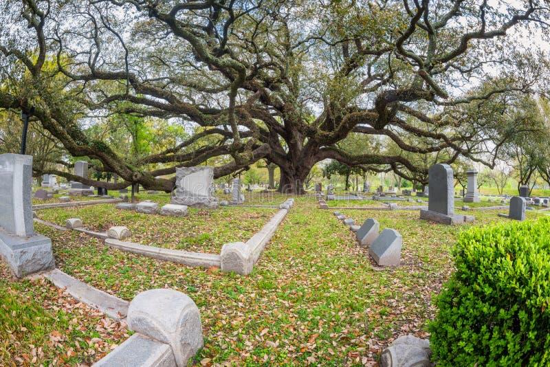 Géant Live Oak sur le cimetière en Houston Texas images stock