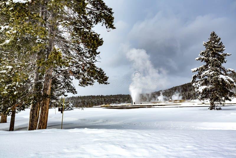 Géiser de Ole Faithful en Yellowstone en invierno fotografía de archivo libre de regalías