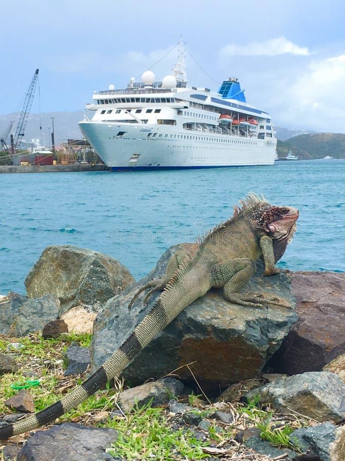 Géminis del barco de cruceros y un lagarto imagenes de archivo