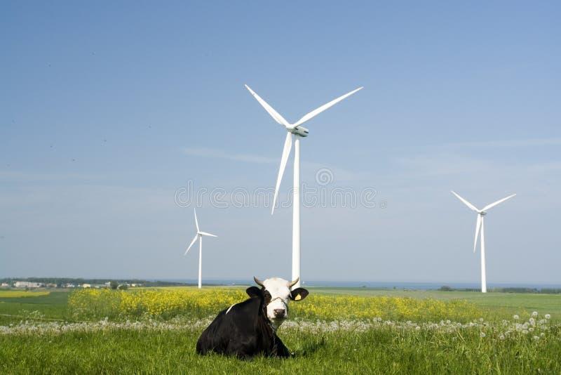 Générateurs et vache de vent photographie stock
