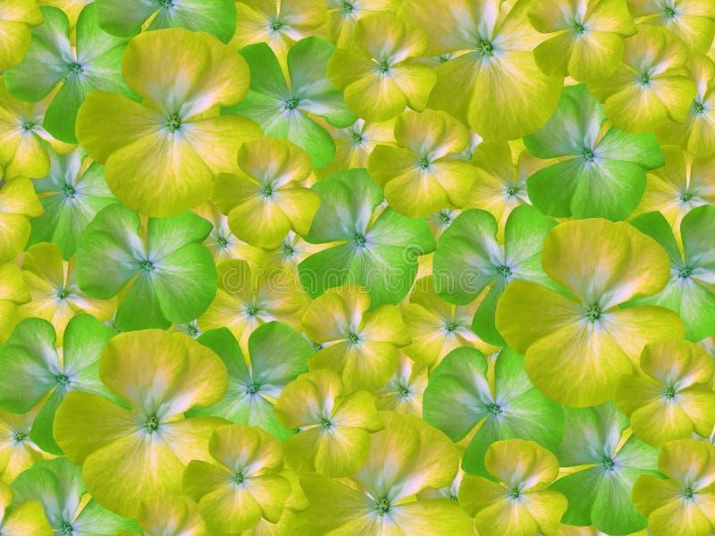 géranium blanc jaune de fleurs Fond floral Fond des fleurs Pour la conception illustration stock