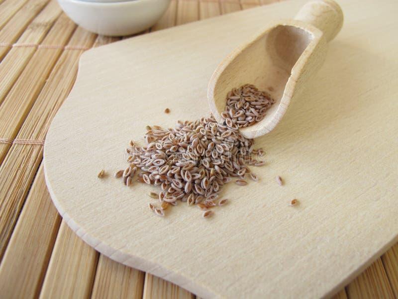 Gérmenes de Indianwheat del desierto, semen de los ovatae de Plantaginis imagen de archivo libre de regalías
