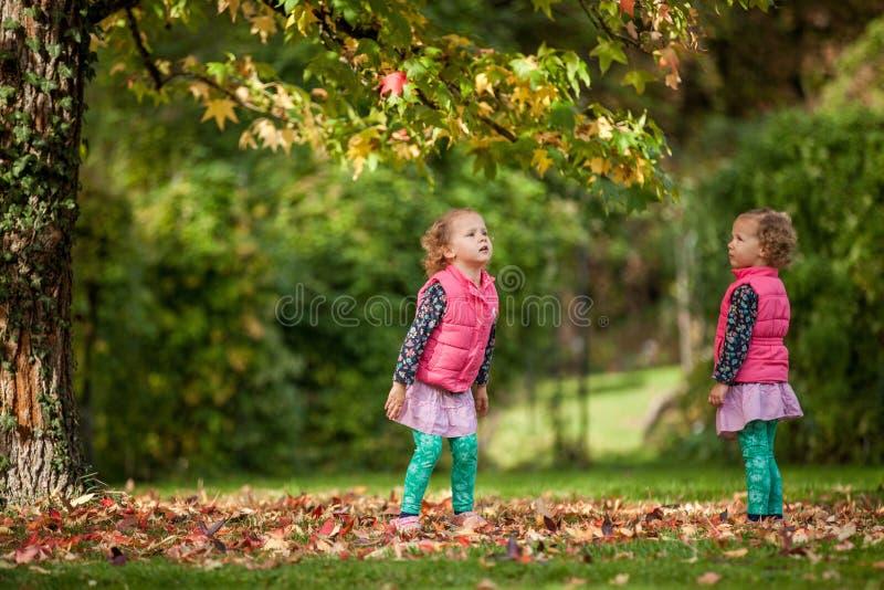 Gêmeos idênticos que têm o divertimento com as folhas de outono no parque, meninas encaracolado bonitos louras, crianças felizes, fotos de stock royalty free