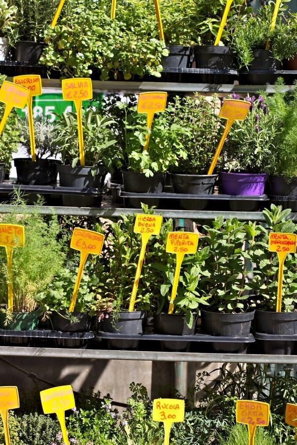 Gênes, herbes aromatiques dans des pots images libres de droits