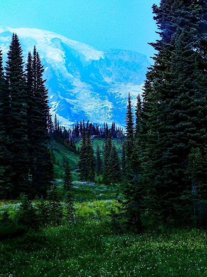 Gór Dżdżyste i Sierpniowe Wildflower łąki obrazy royalty free