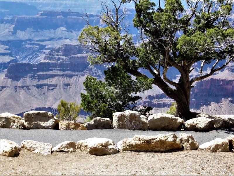 Góra, cedr i ścieżka, Grand Canyon zdjęcia stock