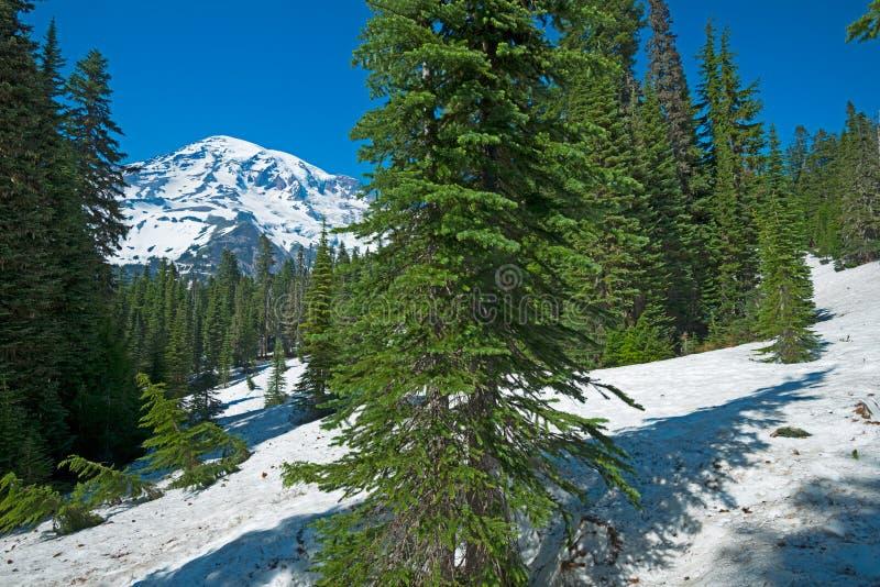 Góra Dżdżysta od Nisqually Vista śladu, Wspina się Dżdżystego parka narodowego fotografia royalty free