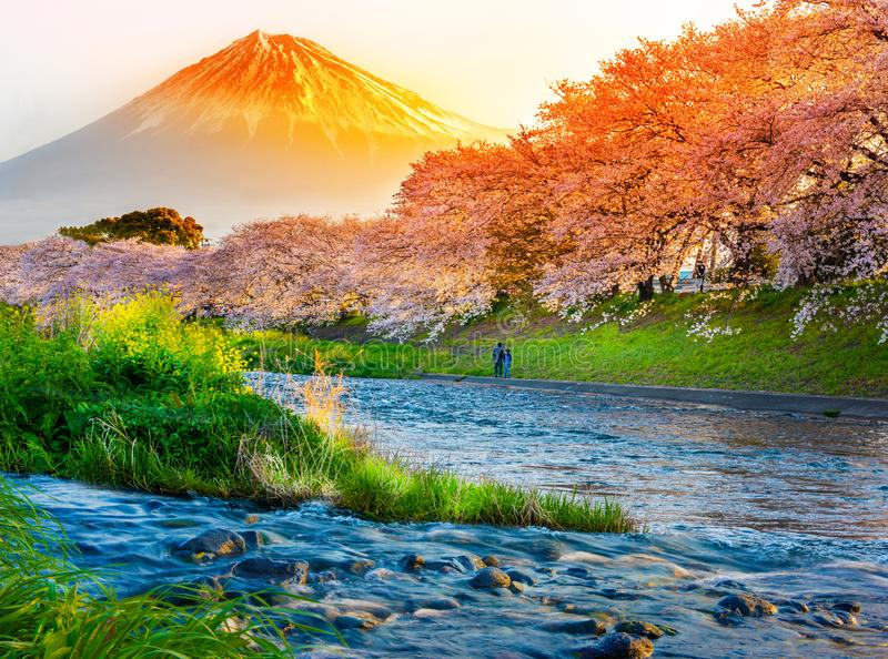 Góra Fuji z kwiatem wiśniowym Sakura nad rzeką rano, Shizuoka, Japonia obrazy stock