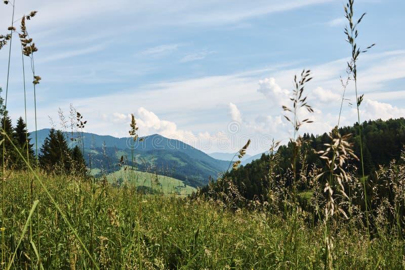 Góra krajobraz Mały Fatra z lasami, wzgórzami i trawą, obrazy royalty free