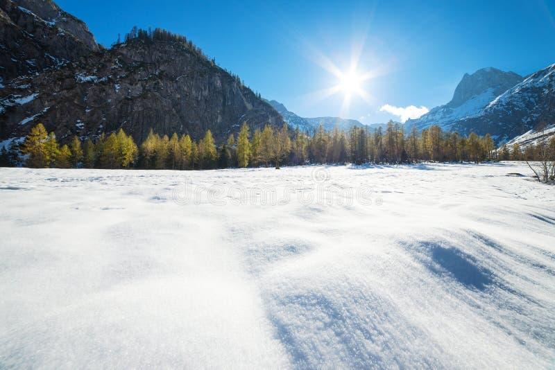 Góra krajobraz na słonecznym dniu z modrzewiami w śniegu Śnieżnego spadku wczesna zima i opóźniona jesień obrazy royalty free