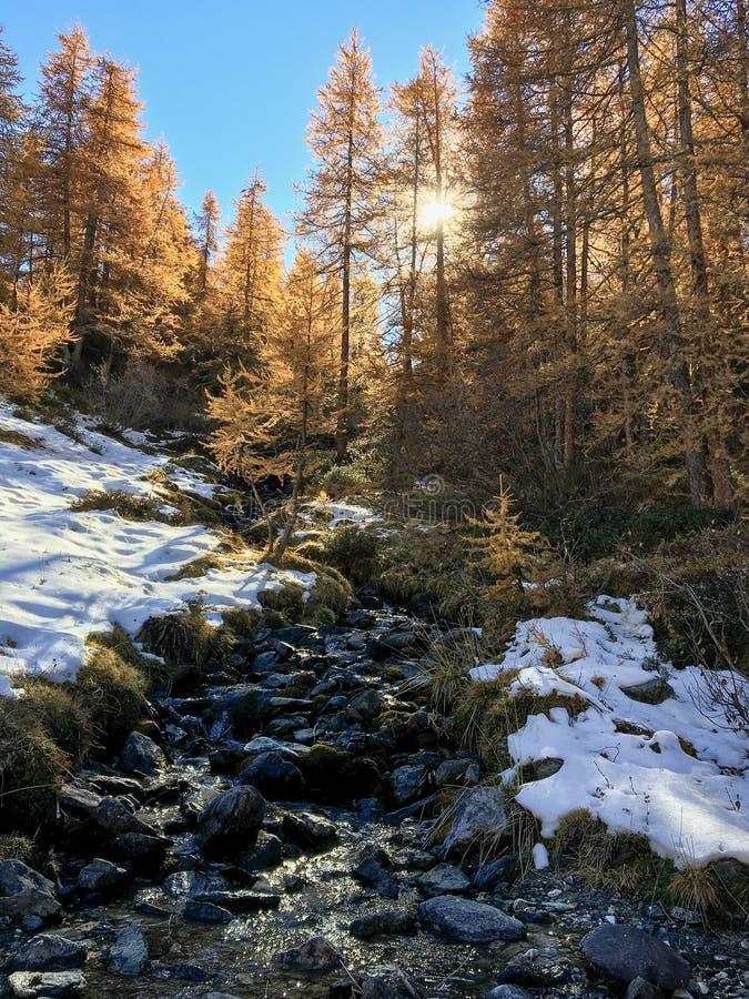 Góra krajobraz w jesieni: mały potok w modrzewiowym lesie wewnątrz zdjęcie stock
