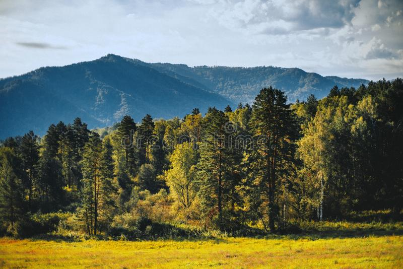 Góra krajobraz z lasem fotografia stock