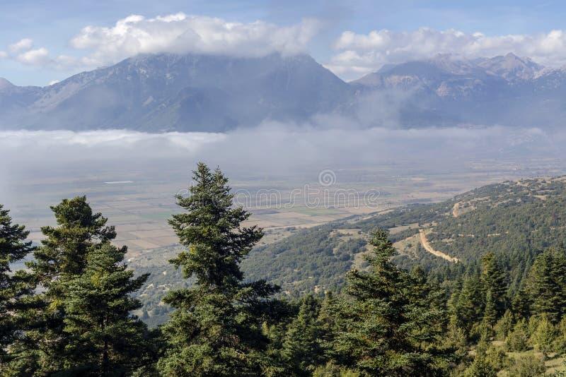 Góra krajobraz z mgłą i świerczyną obrazy royalty free