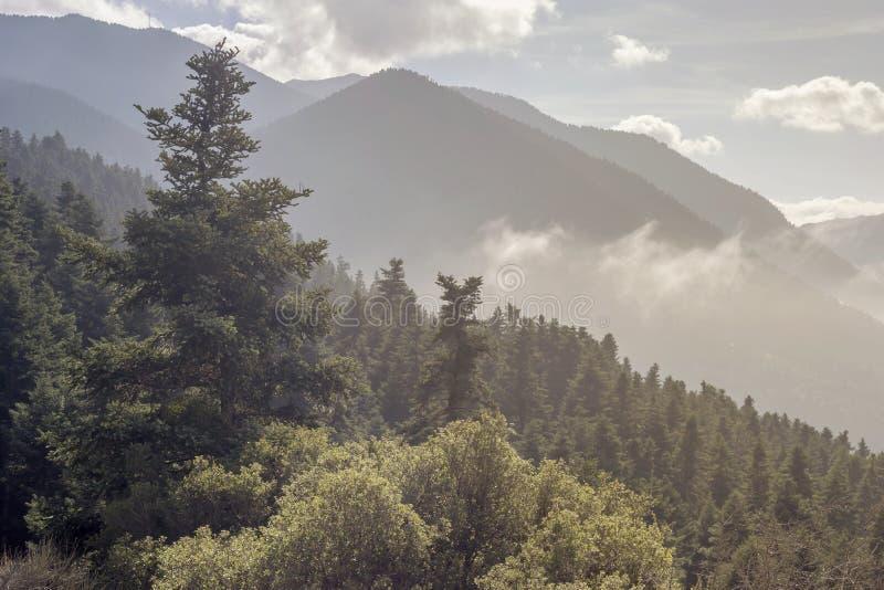 Góra krajobraz z mgłą i świerczyną obraz royalty free