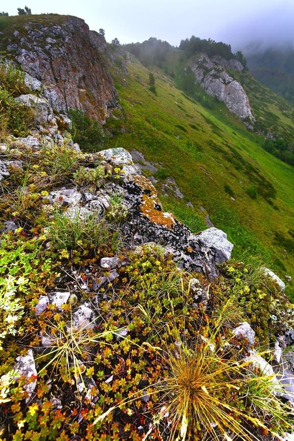 Góra krajobraz z zielonymi szczytami podeszczowymi i ponurymi niebami Russi obrazy stock