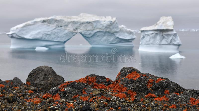 Góra lodowa i kamienisty wybrzeże Greenland Czerwony liszaj na brzeg kamieniach Natura i krajobrazy Greenland obrazy royalty free