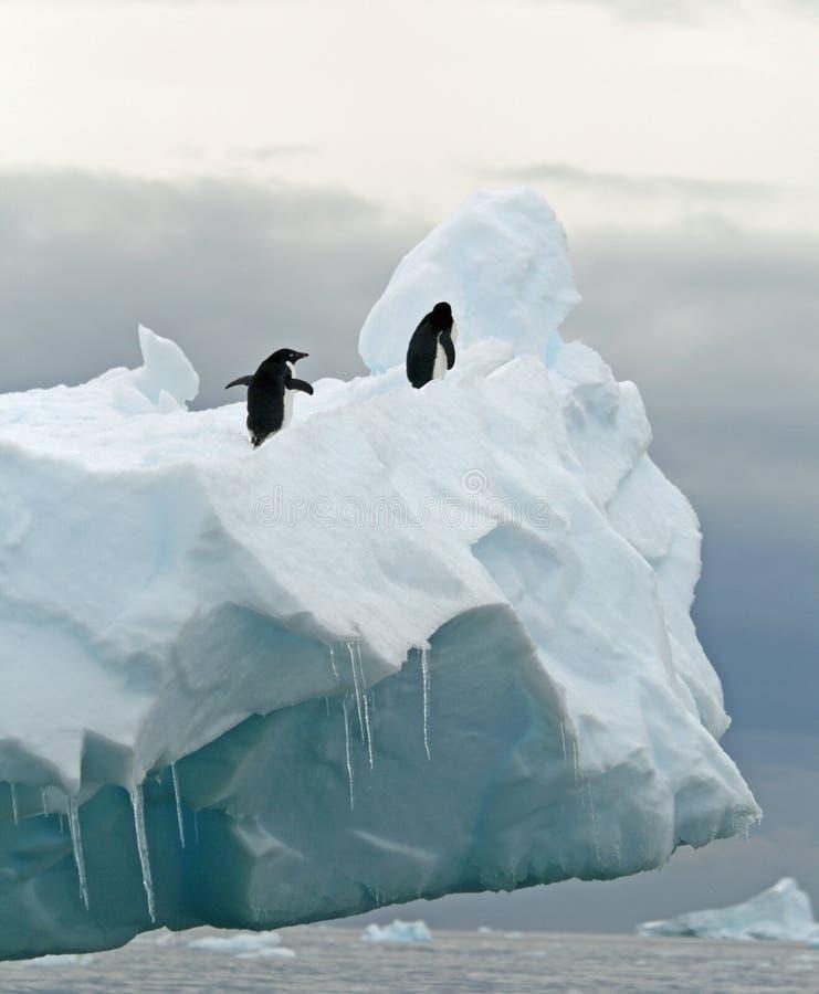 góra lodowa pingwiny zdjęcie stock