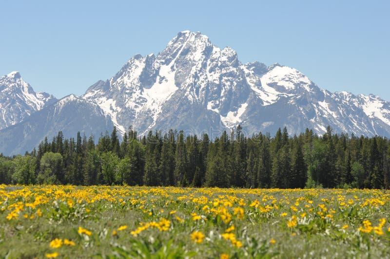 góra osiąga szczyt wildflowers obraz royalty free