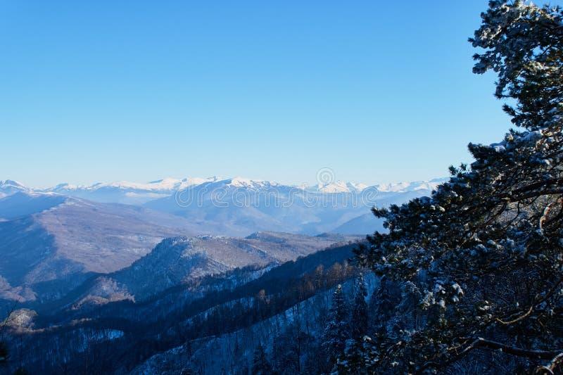 góra panoramiczny widok W przedpolu są przeciw tłu gałąź śnieżyści drzewa, są jasnym niebieskim niebem fotografia stock