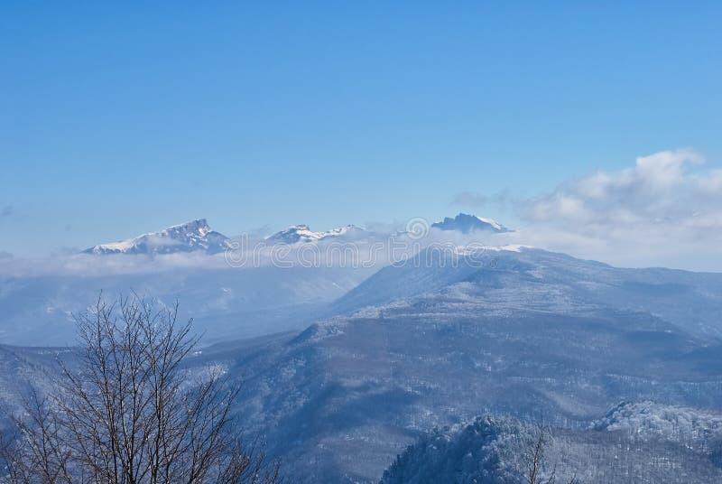 góra panoramiczny widok W przedpolu są przeciw tłu gałąź śnieżyści drzewa, są jasnym niebieskim niebem obrazy royalty free