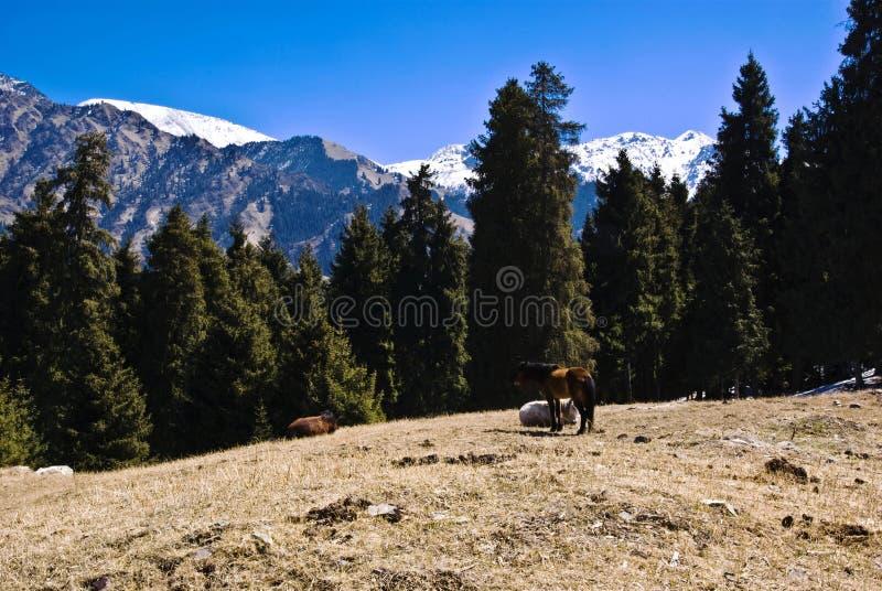 góra tianshan obrazy royalty free
