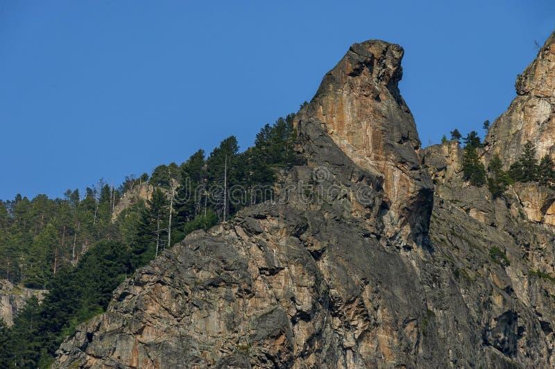 Góra wierzchołek orła ` s skała przerastająca z iglastym lasem i halizną Rila góra zdjęcia royalty free