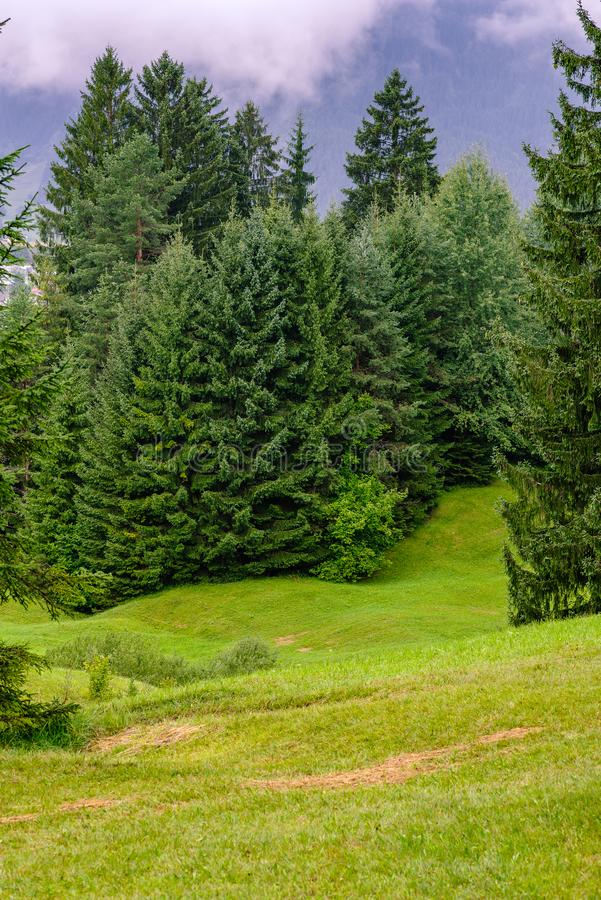 Górkowata łąka w alps blisko Reutte, Austria zdjęcie stock