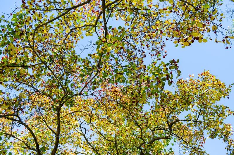 Górne gałąź drzewa tło zdjęcia stock