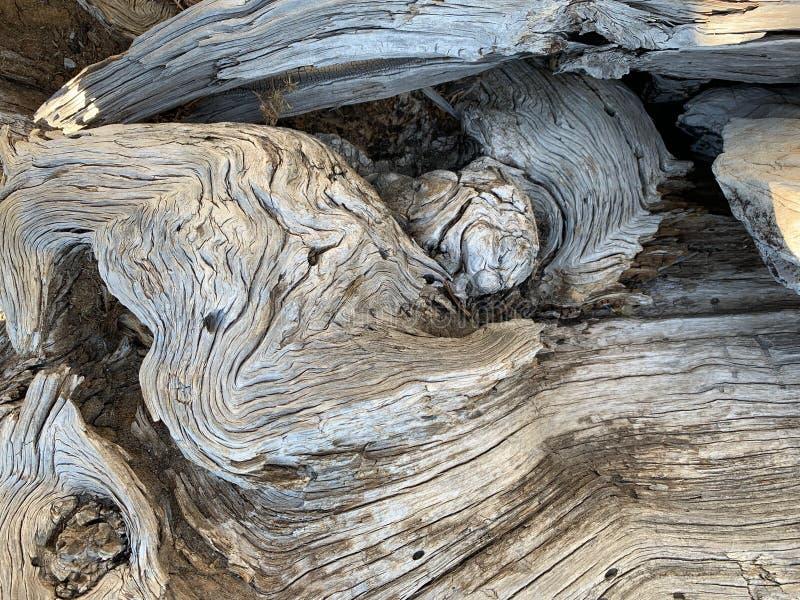Górny Bristlecone pętli ślad, Mt Charleston, Nevada obraz royalty free