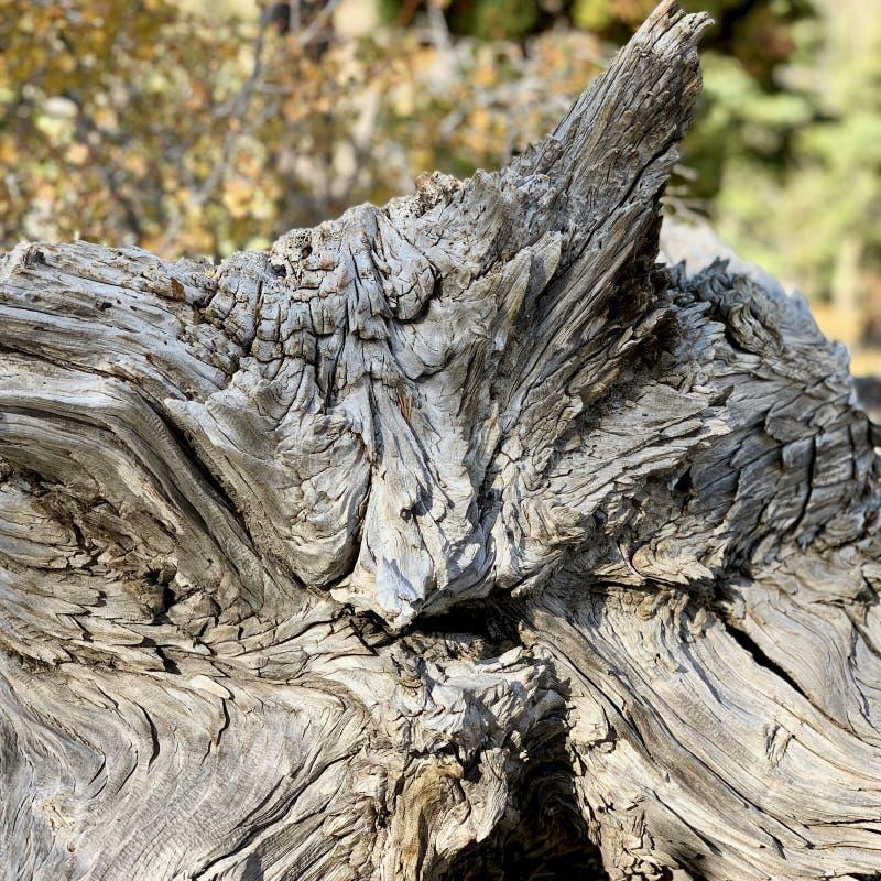 Górny Bristlecone pętli ślad, Mt Charleston, Nevada obrazy royalty free