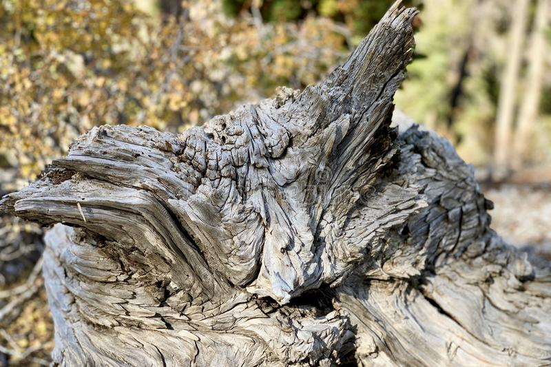 Górny Bristlecone pętli ślad, Mt Charleston, Nevada zdjęcie stock