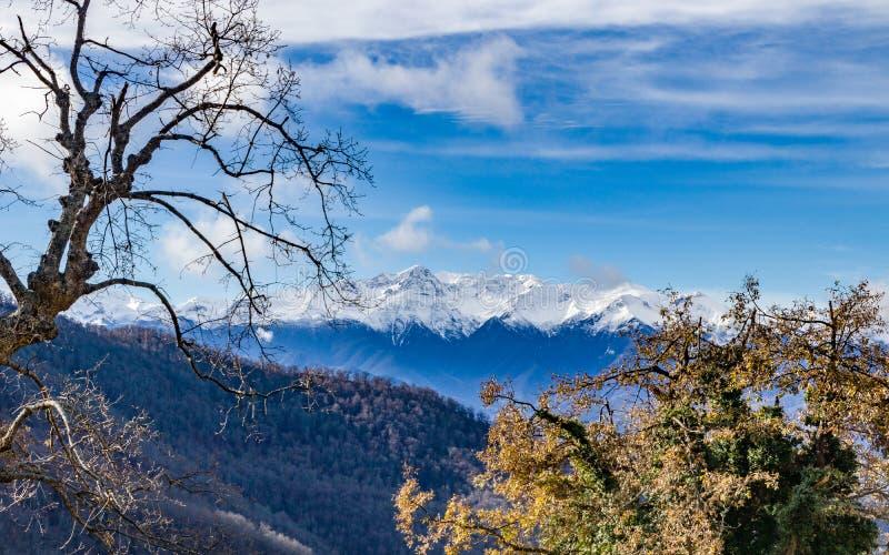 Góry śnieżne i lasy obraz stock